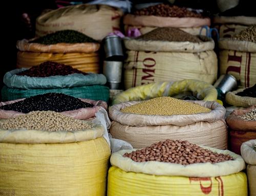 Quelle est la meilleure source de protéine végétale ?